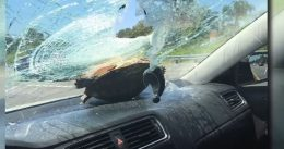 Passenger Survives Being Hit in the Head By Flying Turtle. Turtle Suffers Minor Scratches